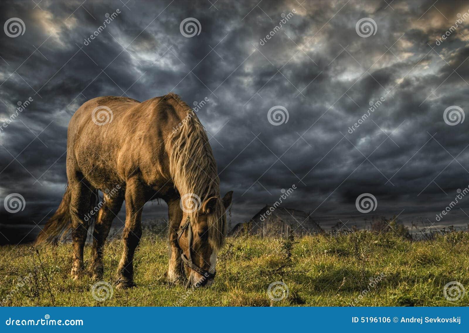Un caballo que pasta en un prado