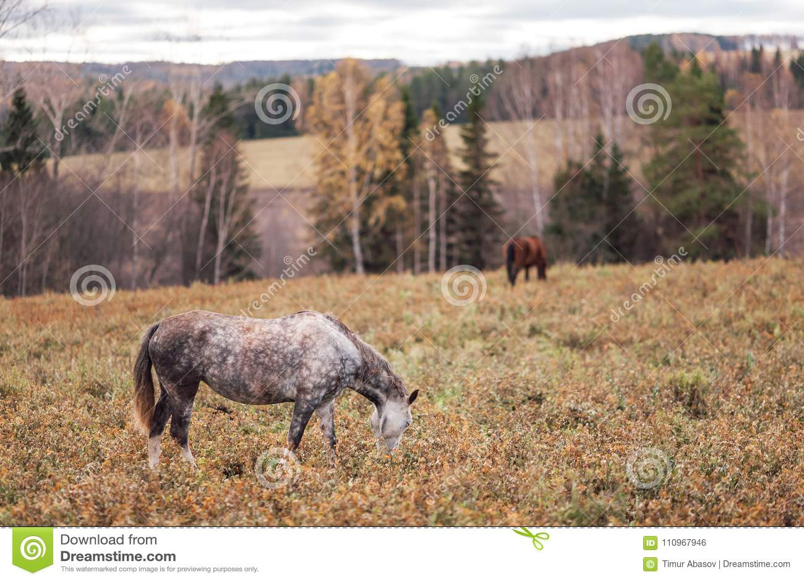 Un caballo solitario
