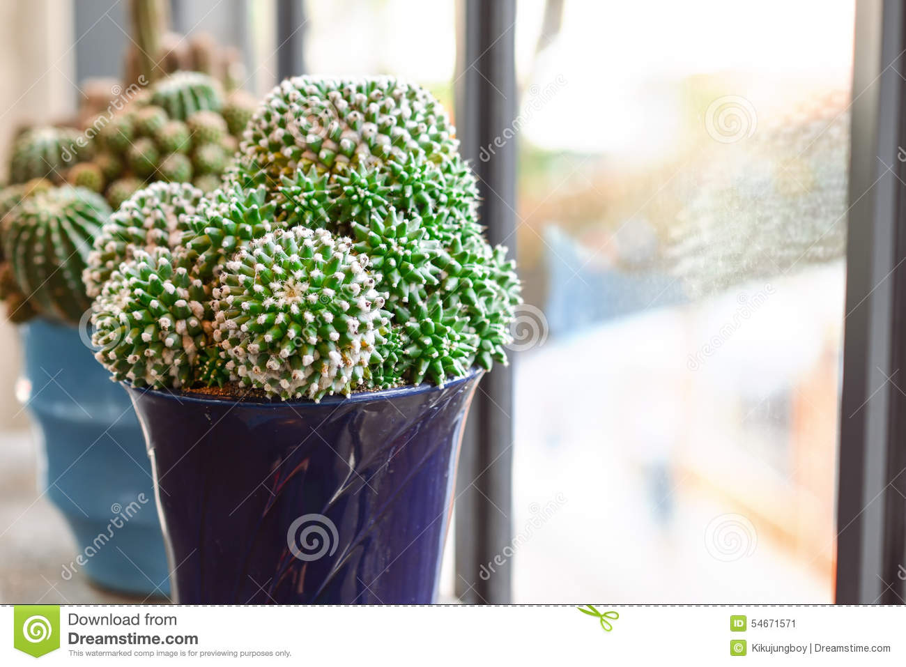 Un cactus vert dans le pot jardinage d 39 int rieur photo for Jardinage d interieur
