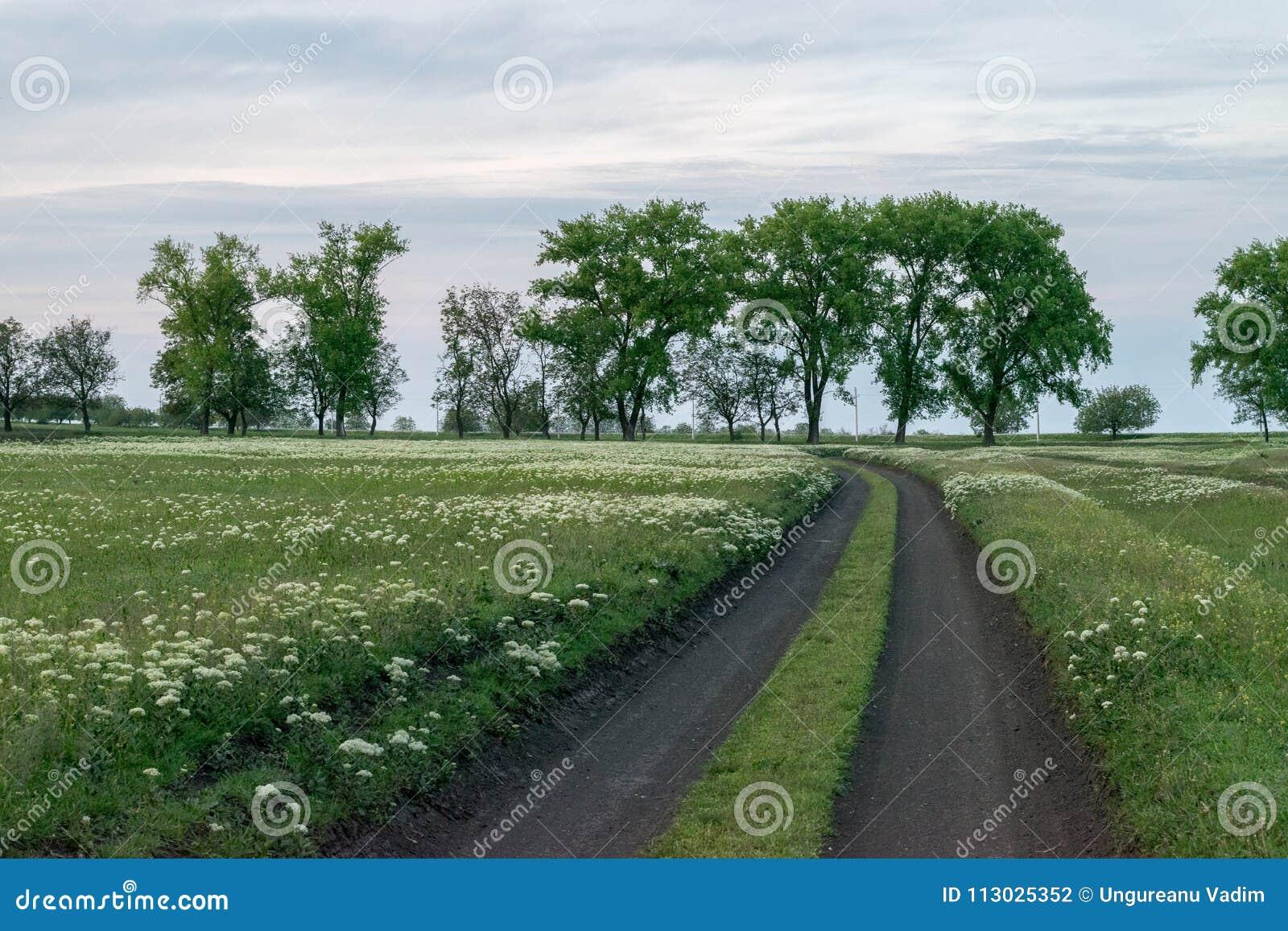 Un camino curvado con las flores que llevan la manera, con los árboles en los vagos