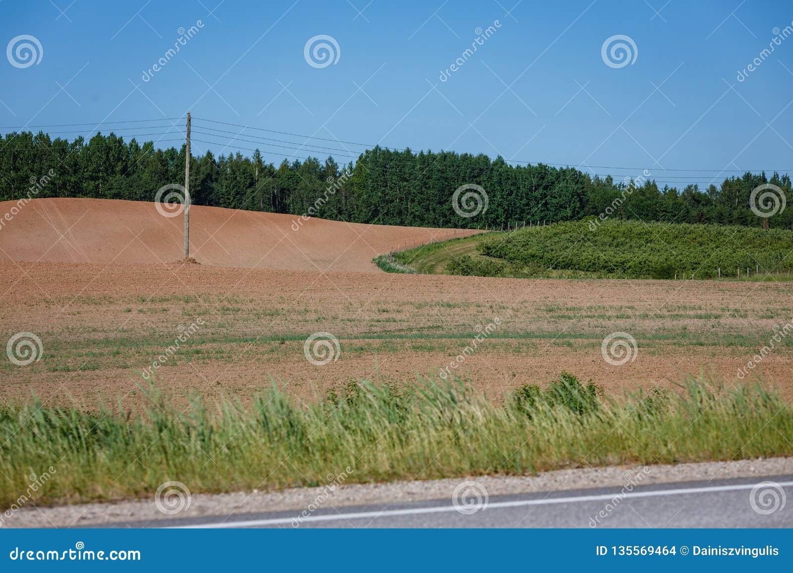 Un campo agricolo elaborato con un palo elettrico nel mezzo