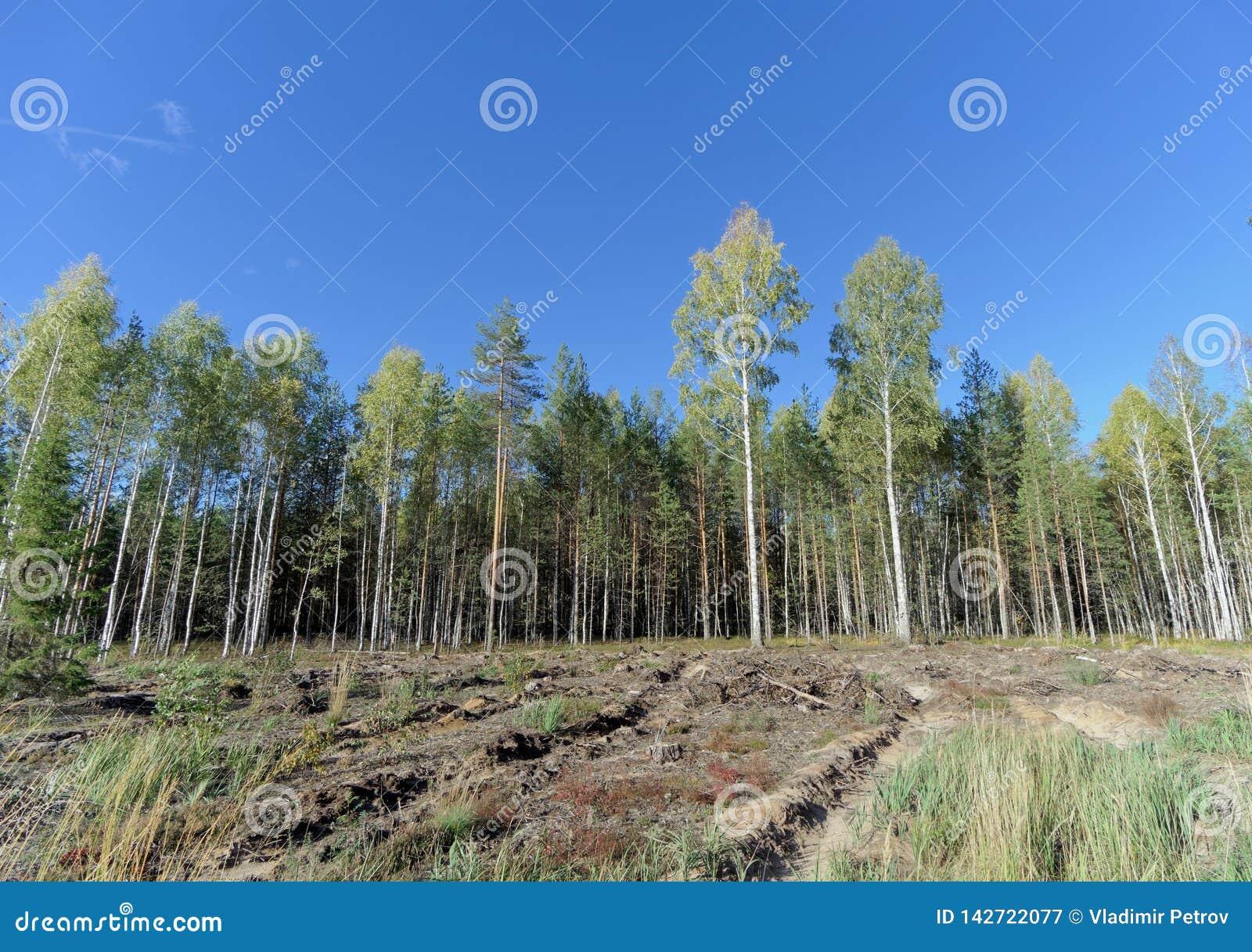 Un campo con erba che ha cominciato ingiallire e legno