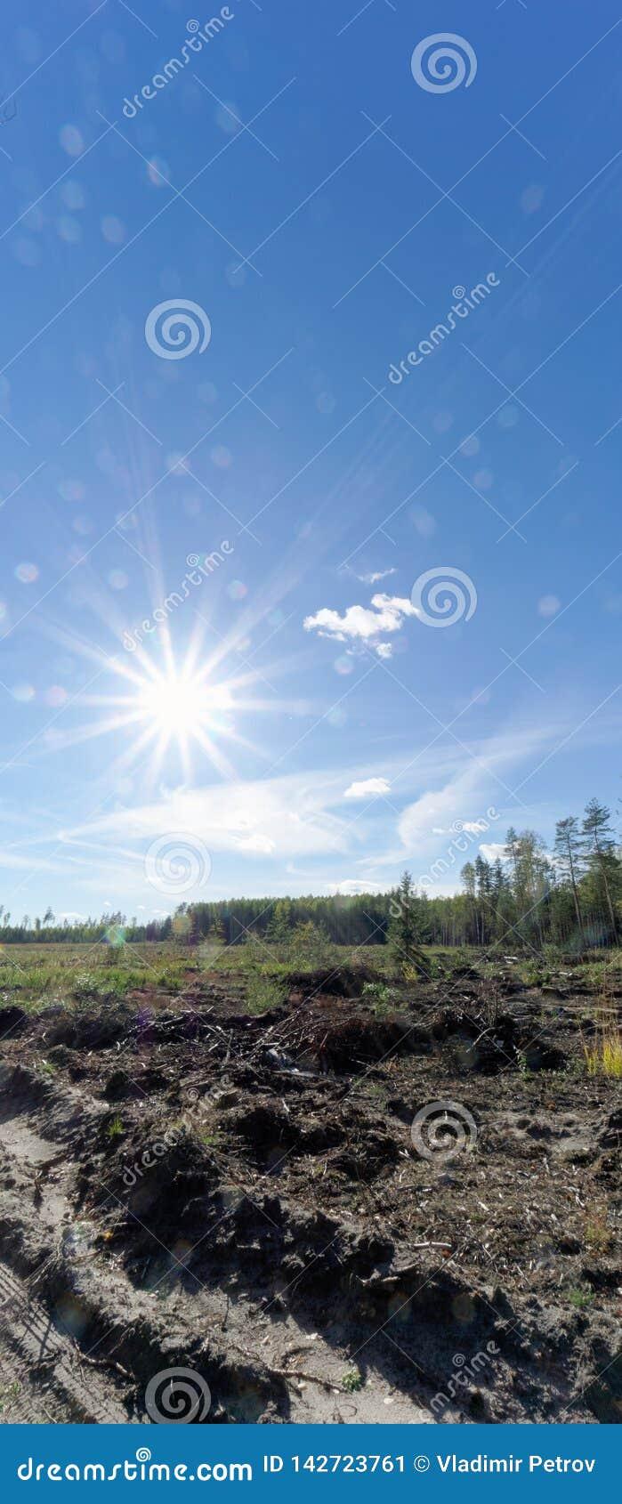 Un campo con erba che ha cominciato ingiallire e legno Sun luminoso nel telaio glare