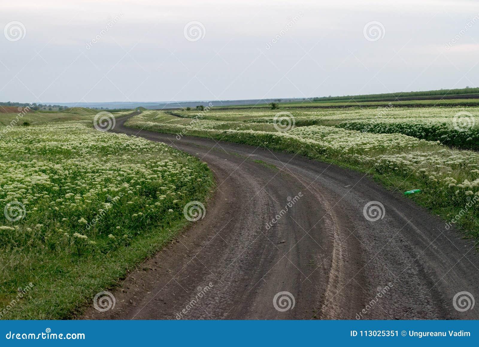 Un campo de flores con un camino en el centro