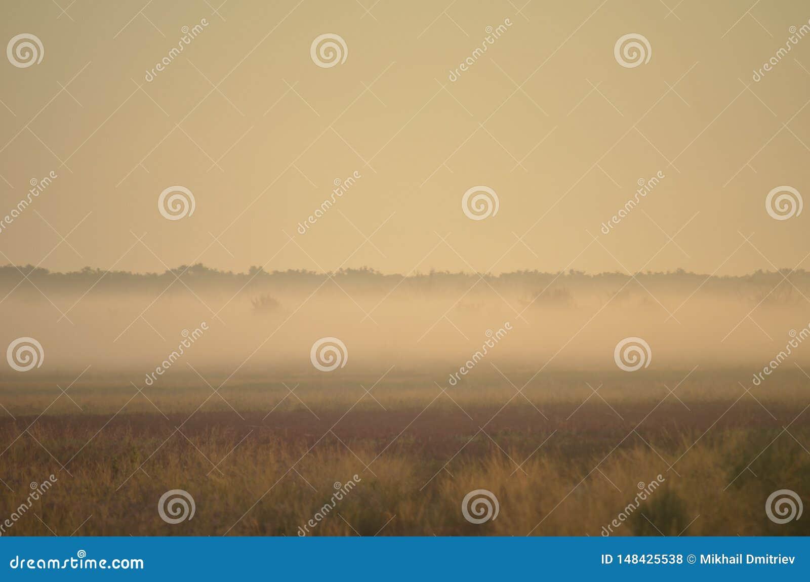 Un campo dei fiori selvaggi e delle erbe è protetto in nebbia di mattina