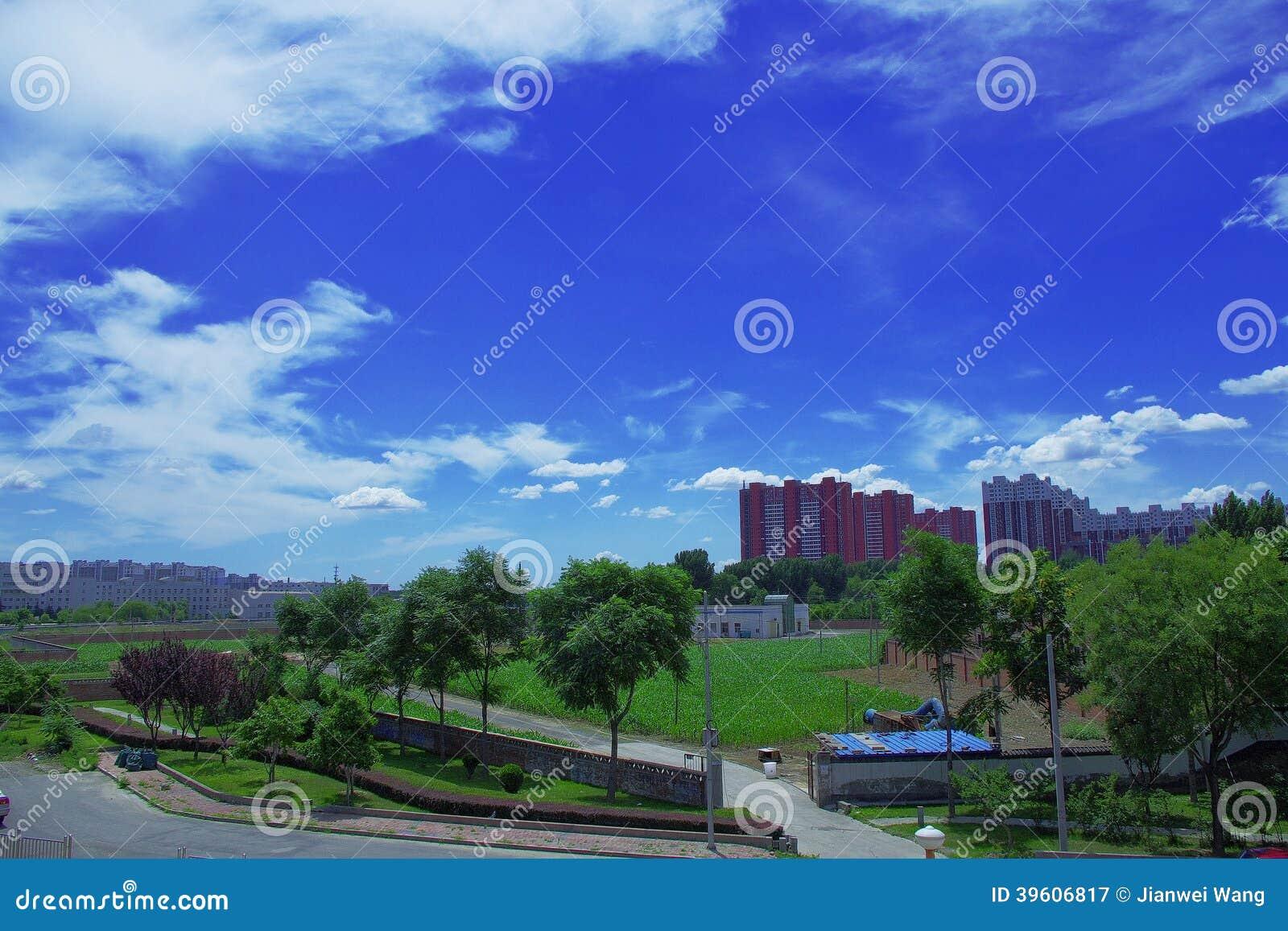 Un campo di grano intorno alle costruzioni e cielo blu con il cielo a pecorelle