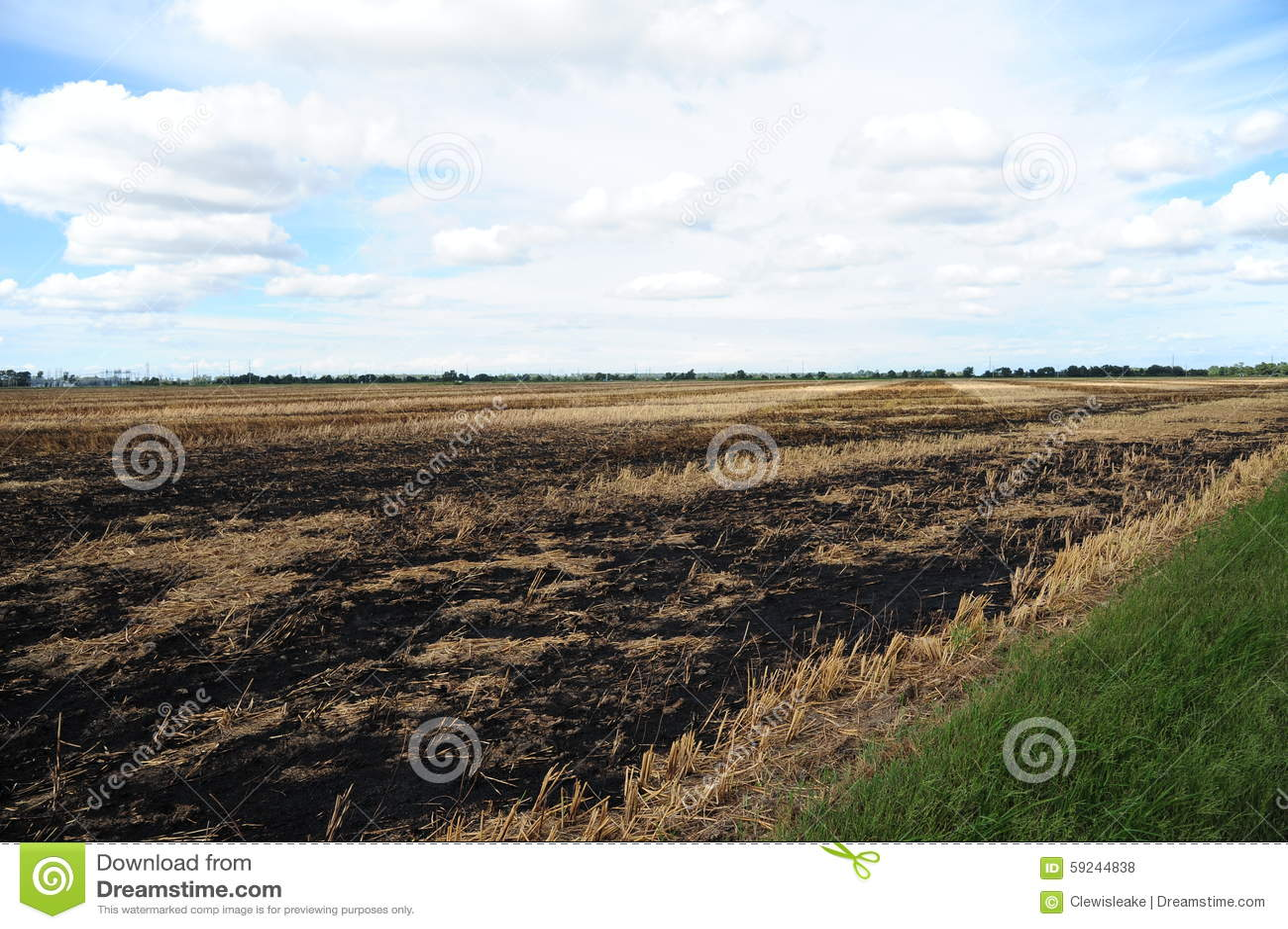Un campo que se ha quemado para despejar residuo de la cosecha