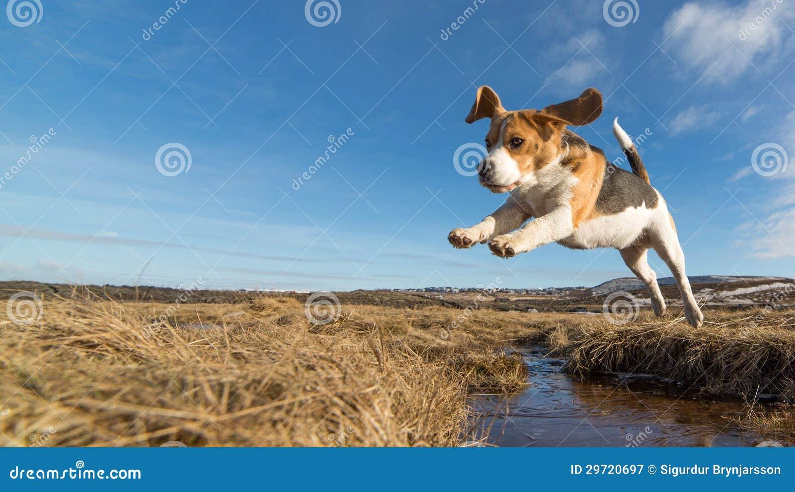Un cane che salta sopra l acqua