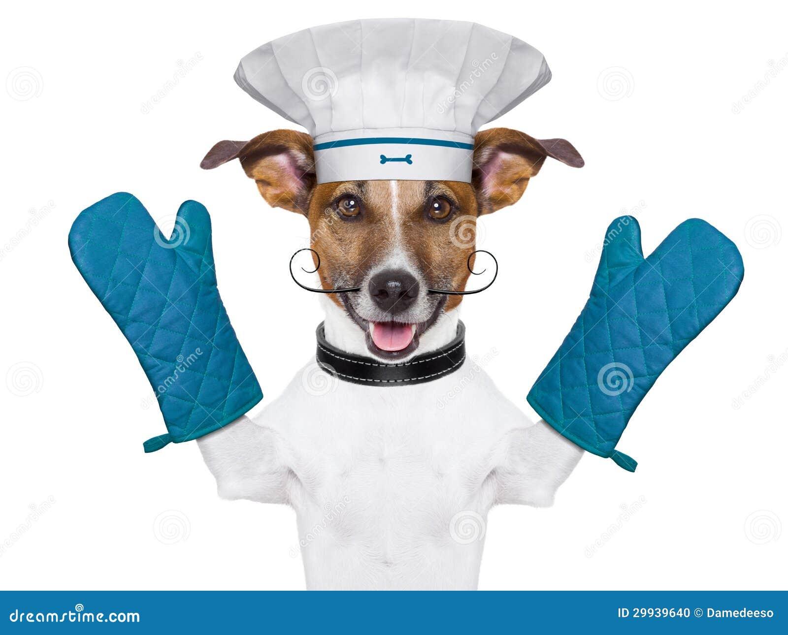 chef canino