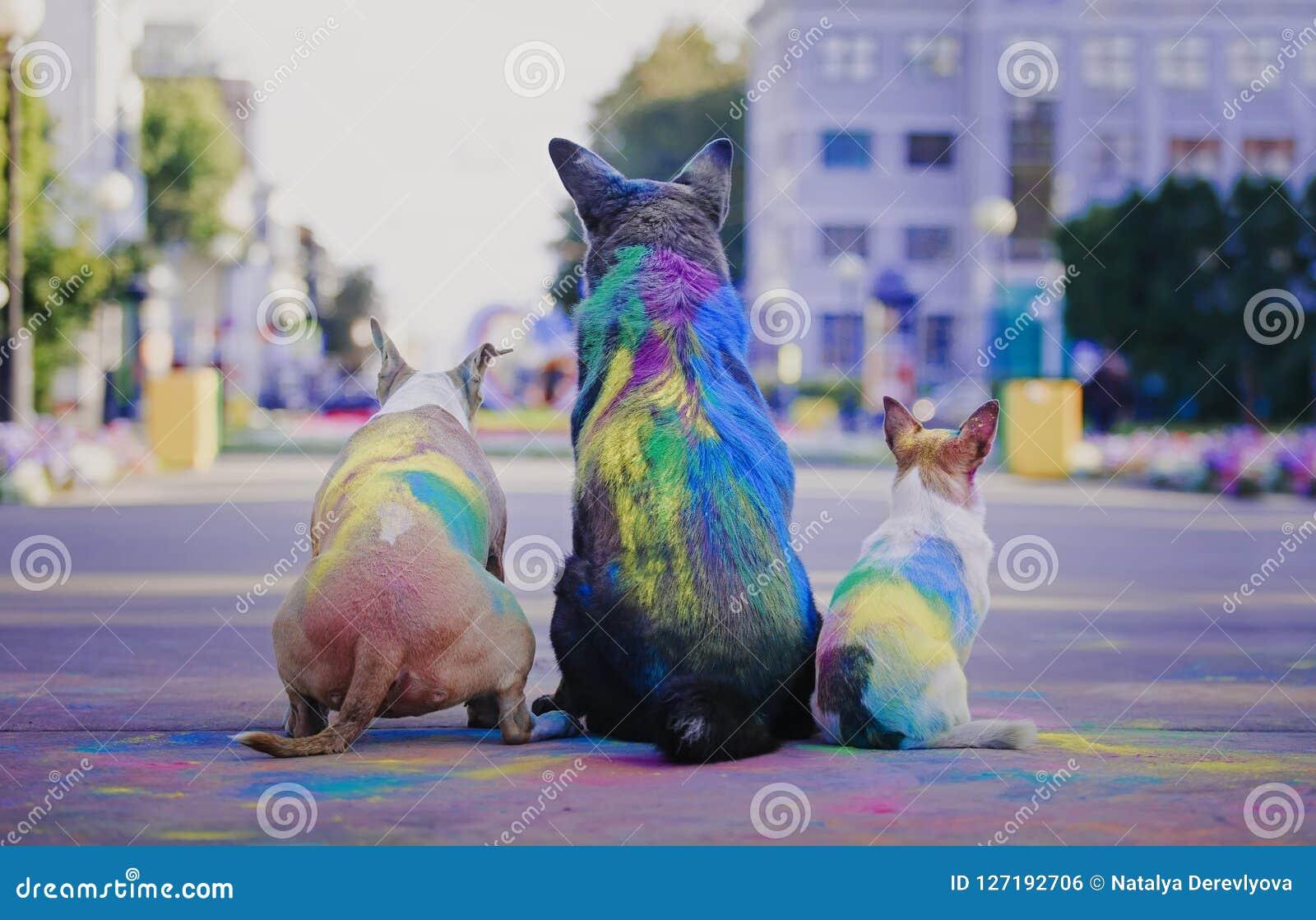 Un cane divertendosi con le pitture del holi