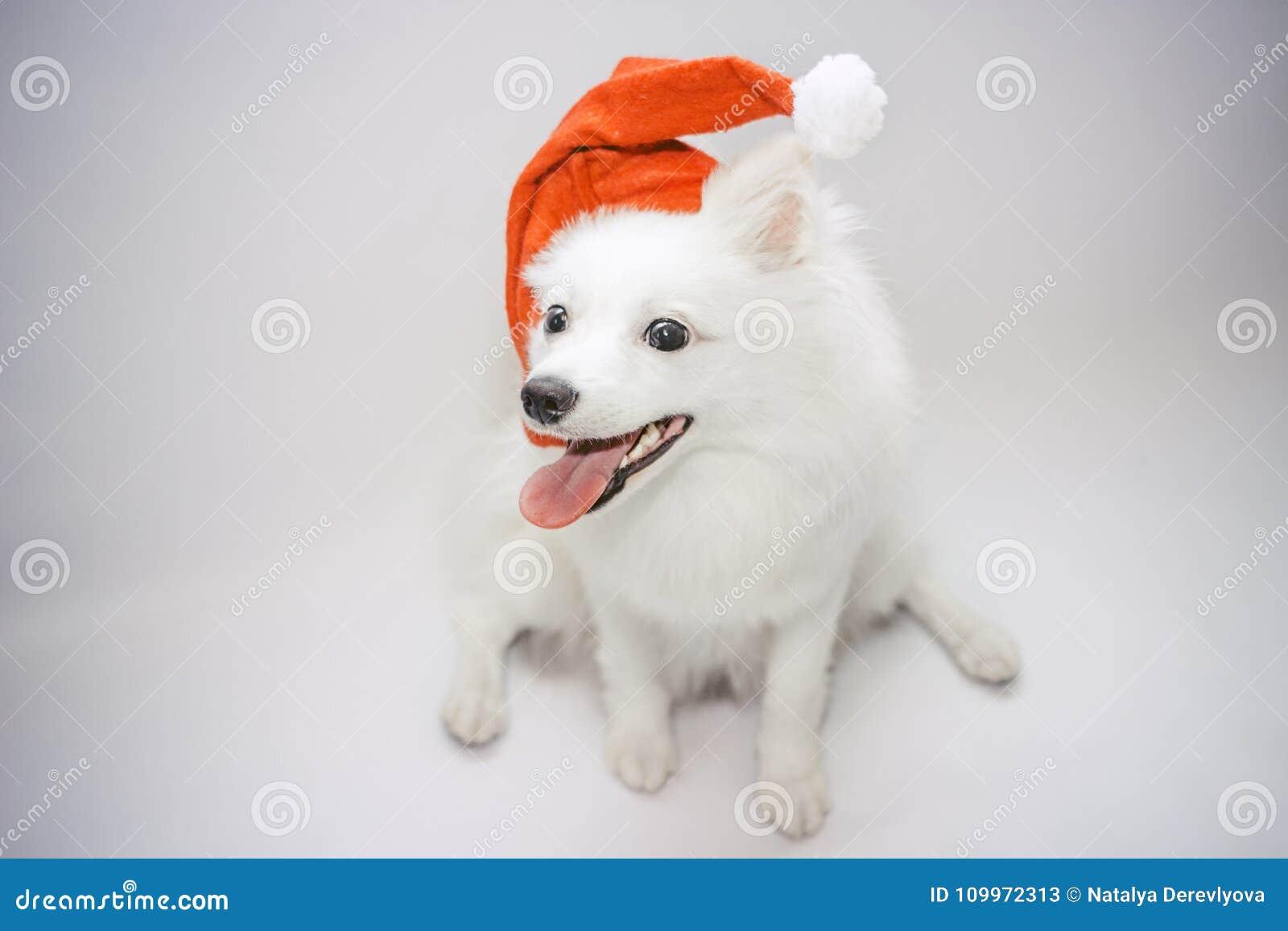 Un cane nel cappuccio di Santa