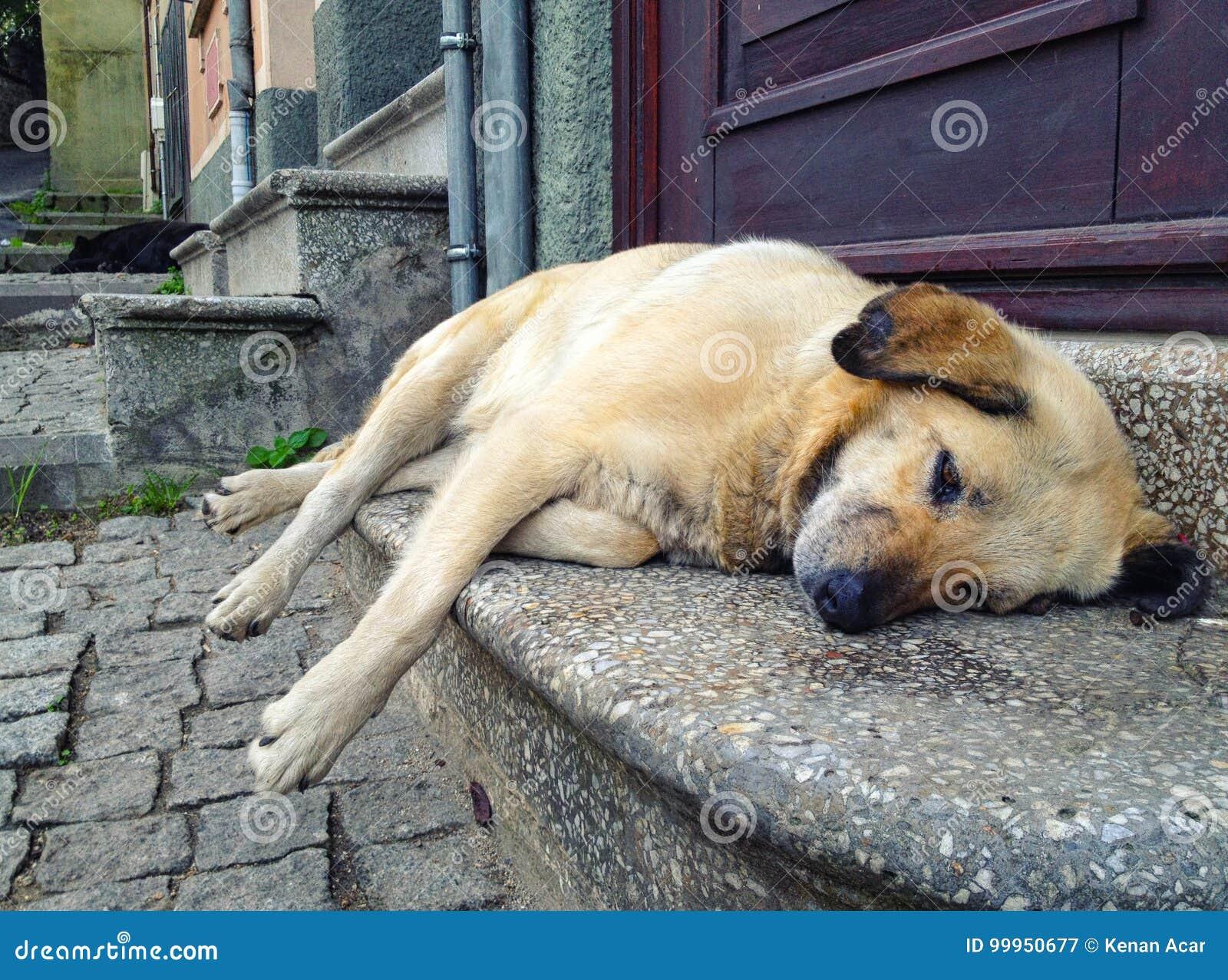 Un cane stanco della via