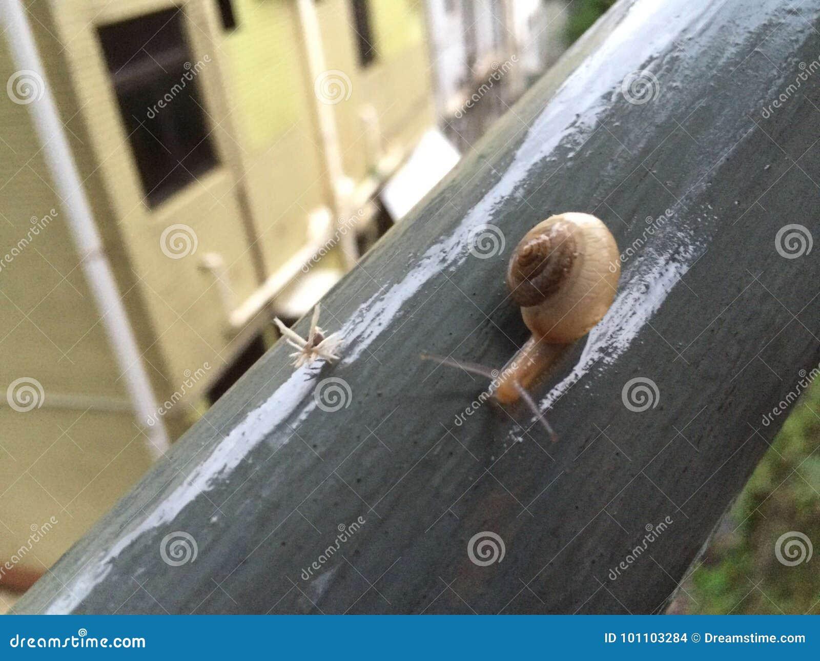 Un caracol y un insecto en barras de hierro