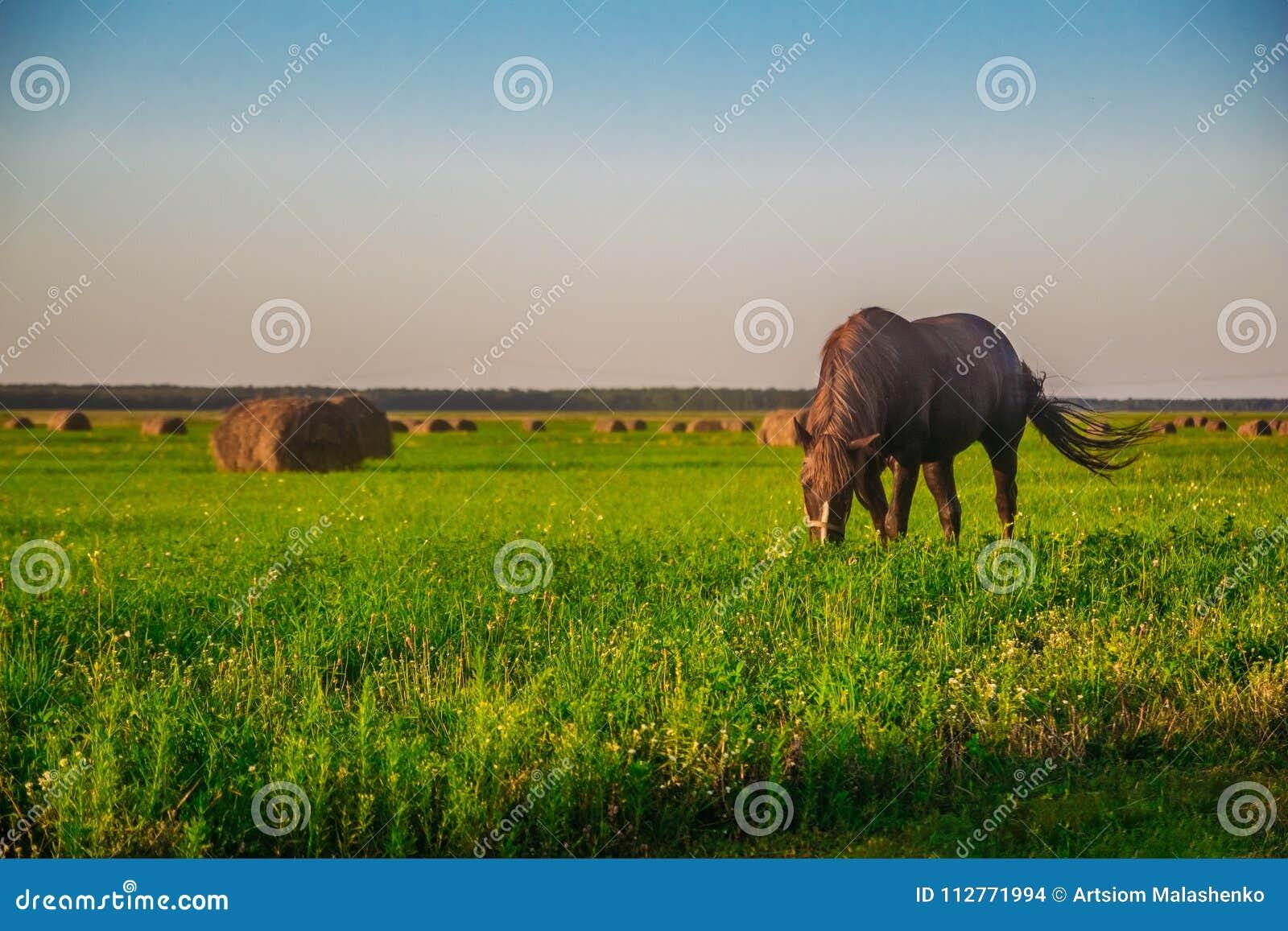 Un cavallo su un campo verde