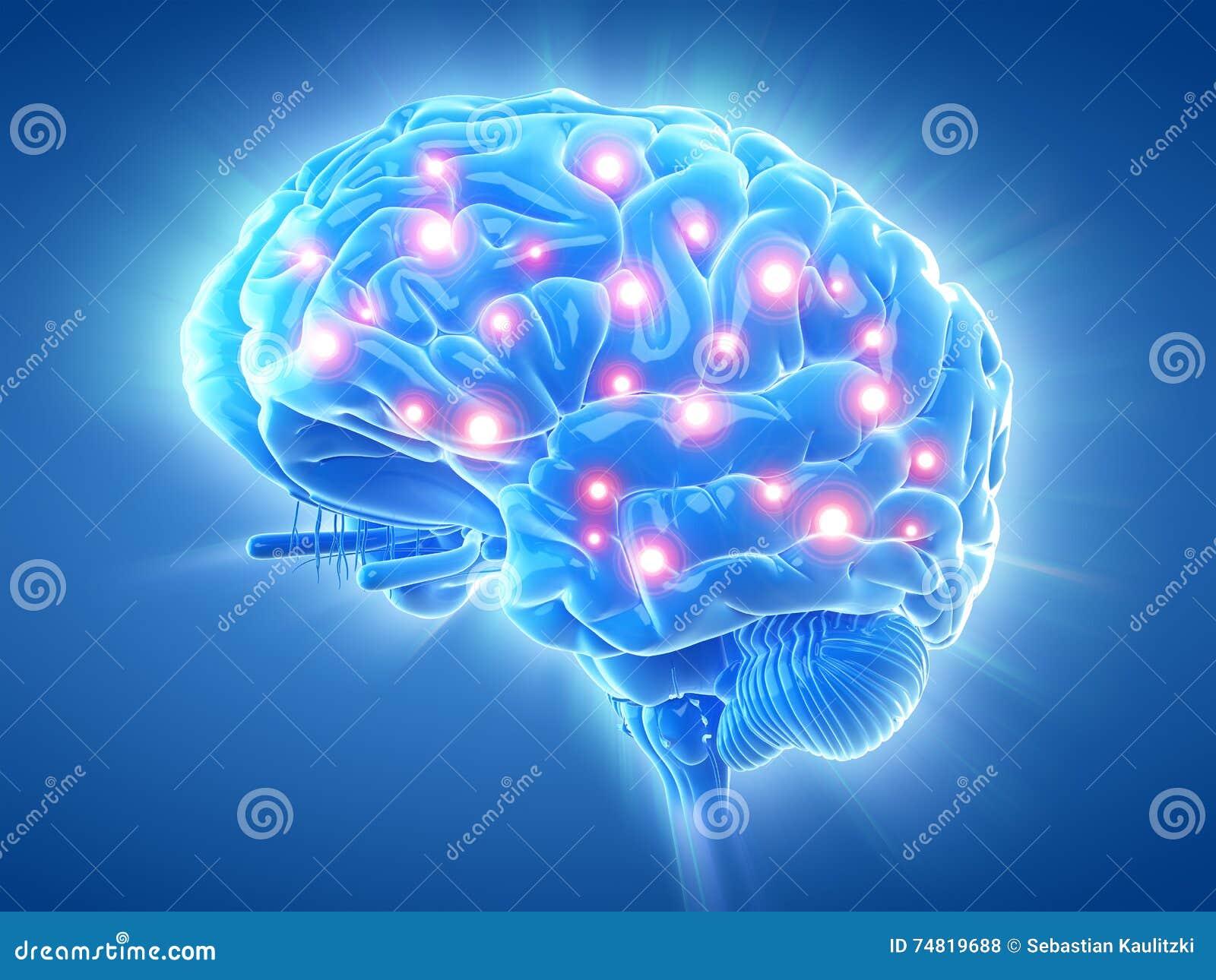 Un cerebro activo