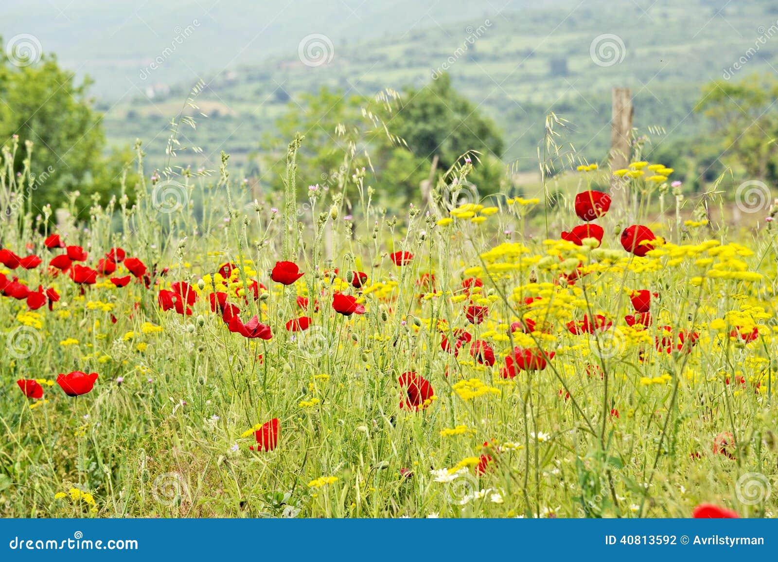 un champ des fleurs jaunes et des fleurs rouges photo stock image 40813592. Black Bedroom Furniture Sets. Home Design Ideas