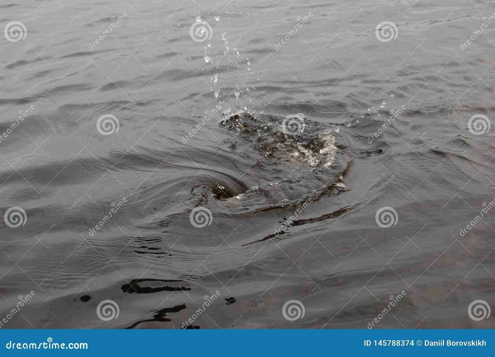 Un chapoteo del agua en el lago