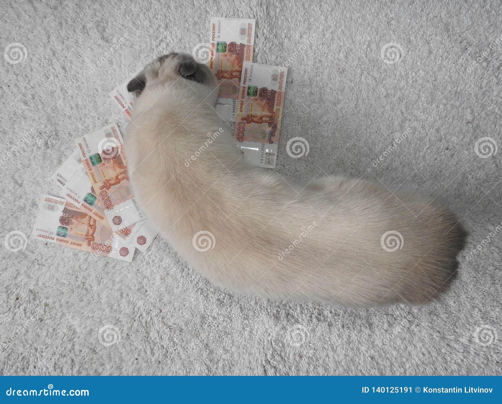 Un chat blanc est joué avec l argent, un fond brouillé