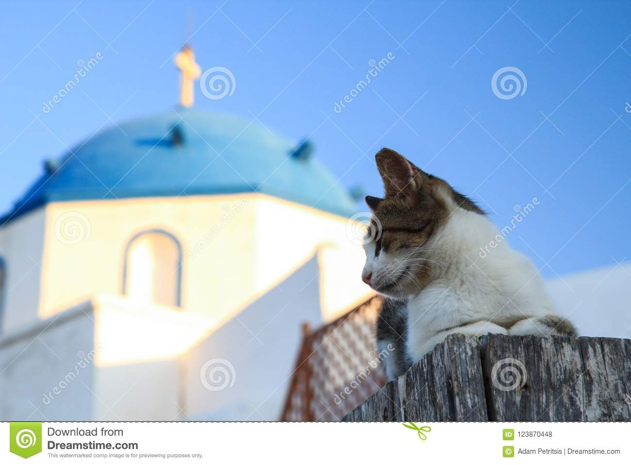 Un chat contre une église grecque d orthodoc