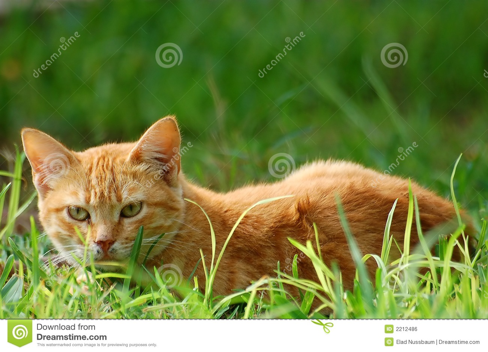 un chat dans l 39 herbe image libre de droits image 2212486. Black Bedroom Furniture Sets. Home Design Ideas