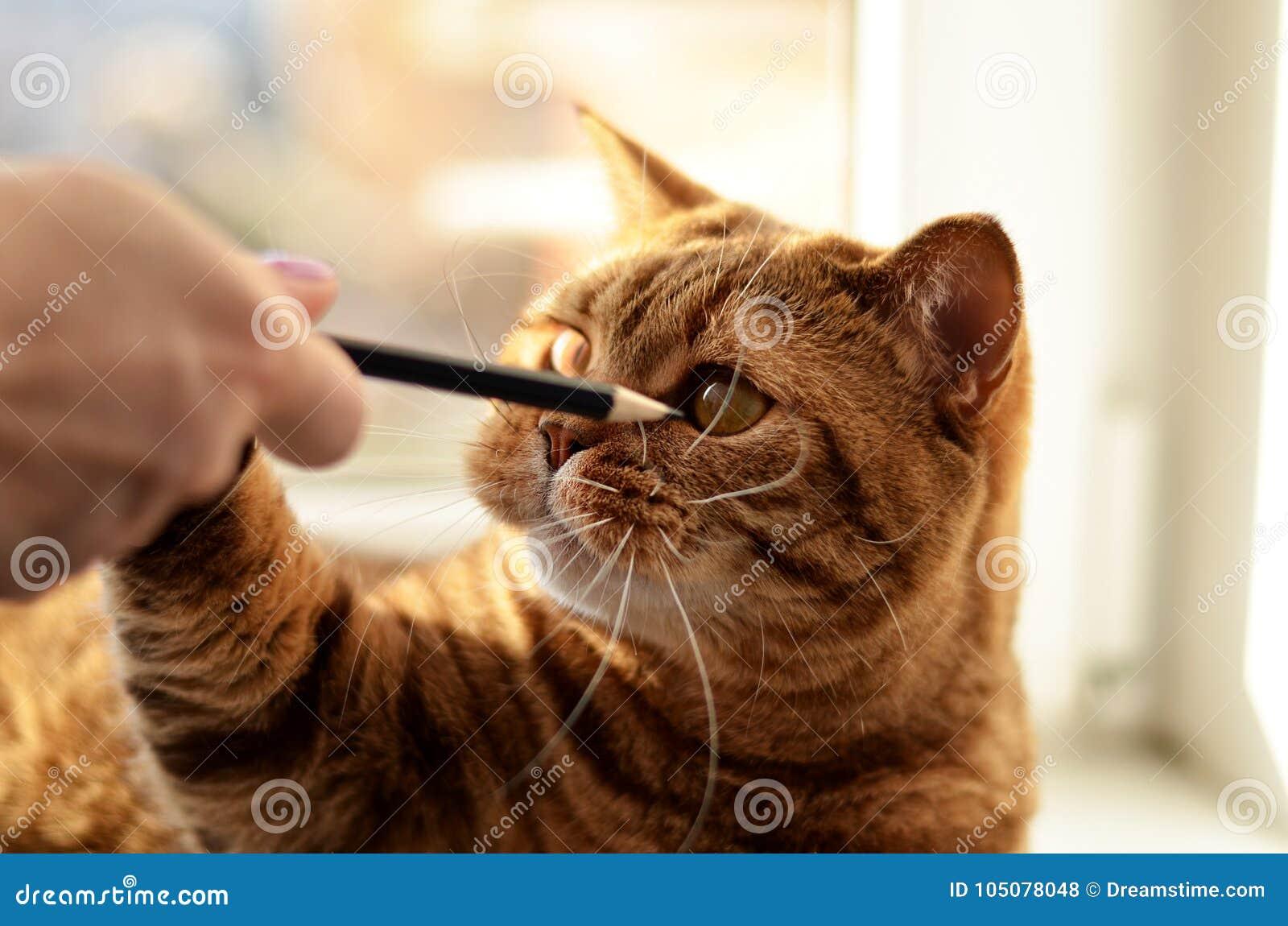Un chat et ses crayons préférés