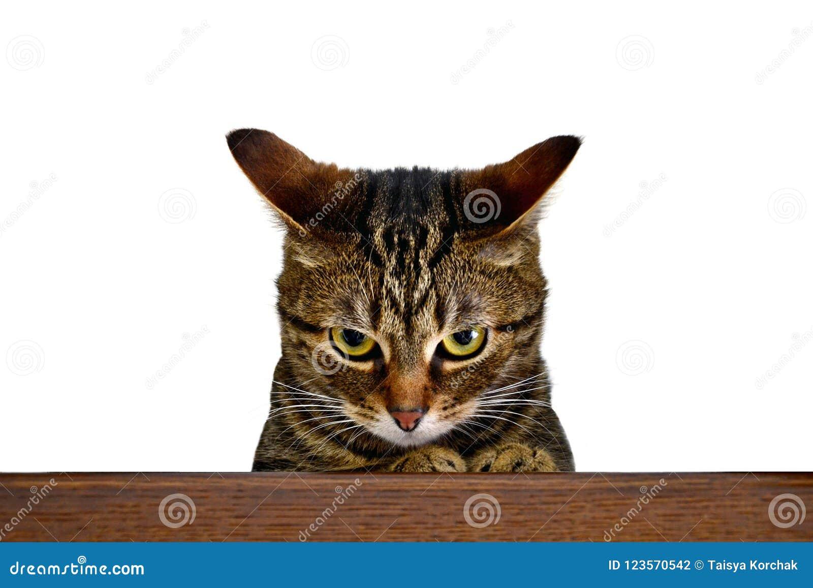Chat Furieux un chat furieux photo stock. image du chat, publicité - 123570542
