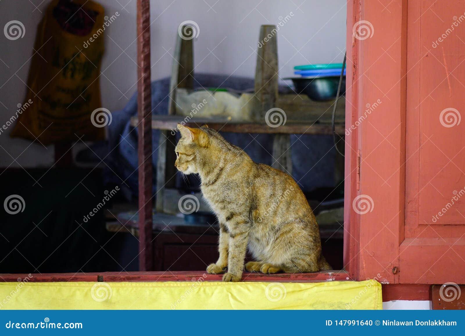 Un chat mignon d?tendant ? la maison rurale