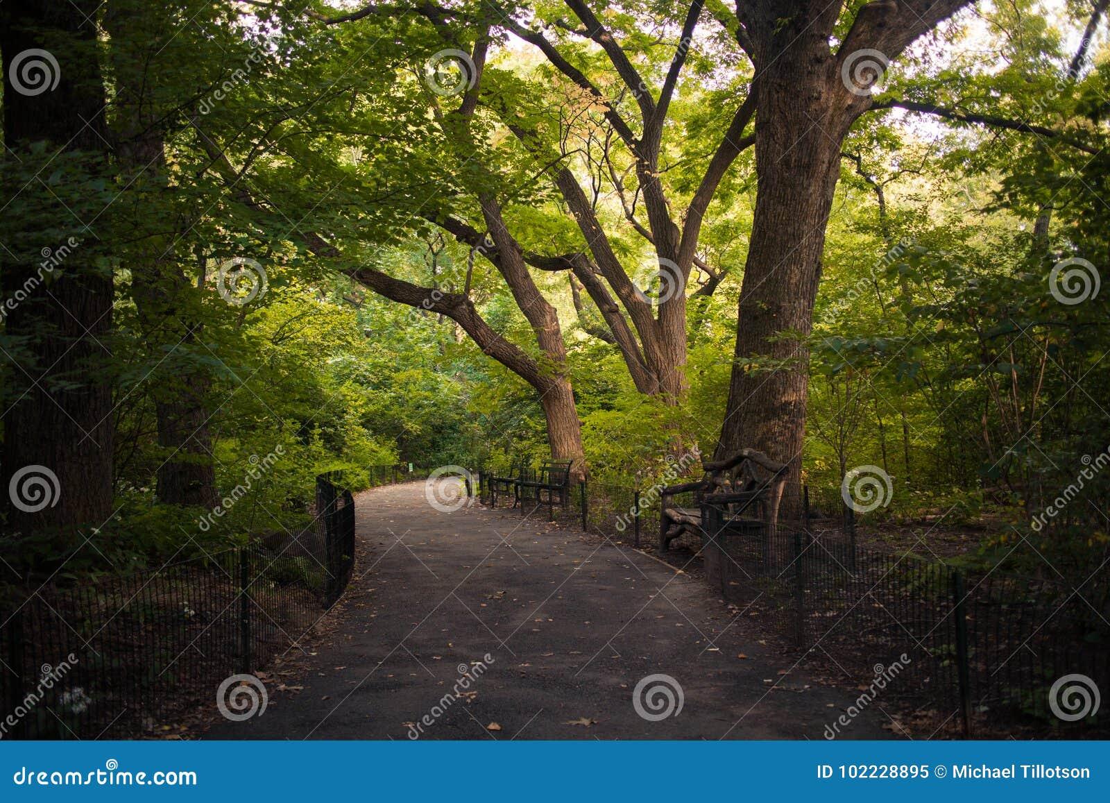Un chemin à travers les arbres dans le Central Park, New York City