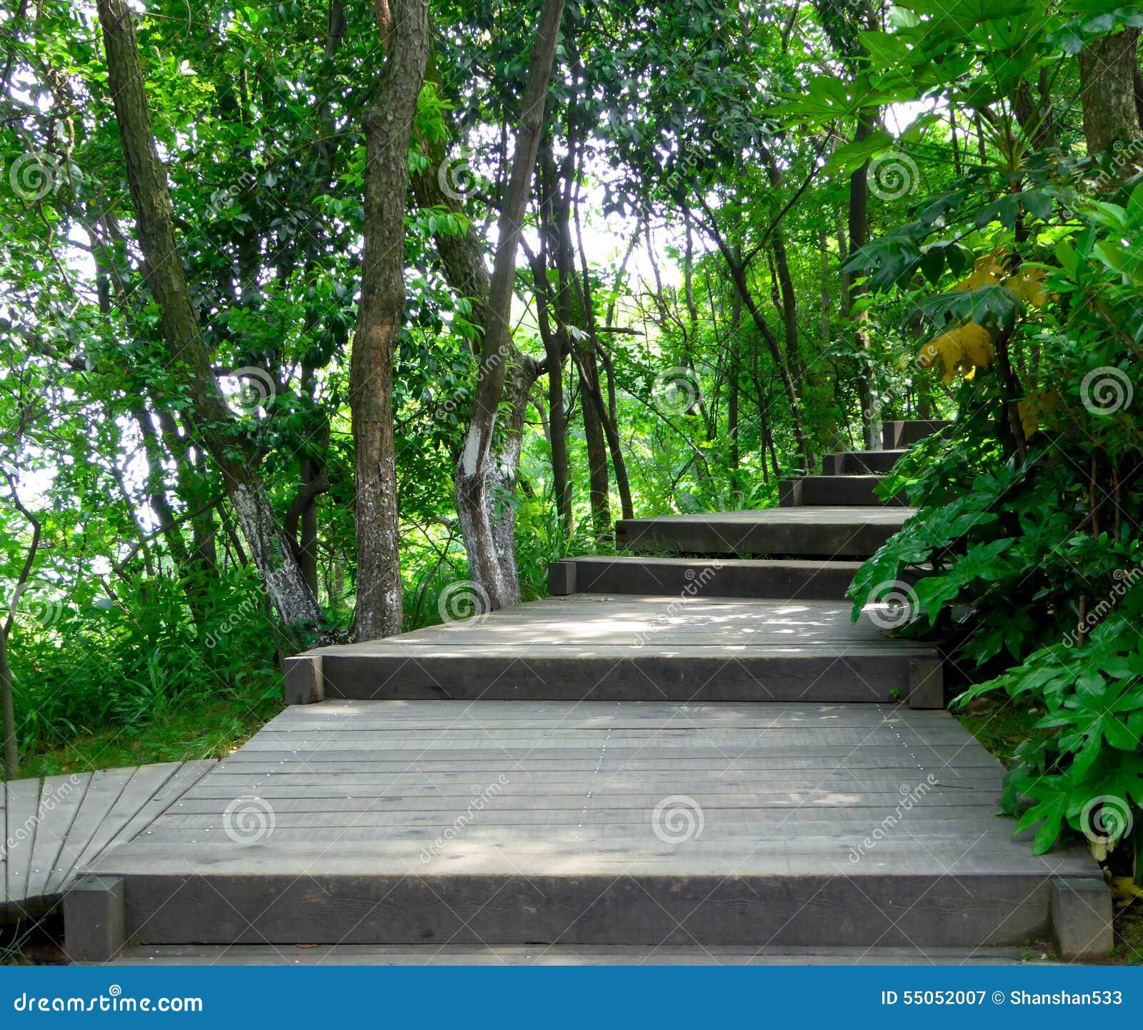 un chemin en bois travers une for t en bambou photo stock image 55052007. Black Bedroom Furniture Sets. Home Design Ideas