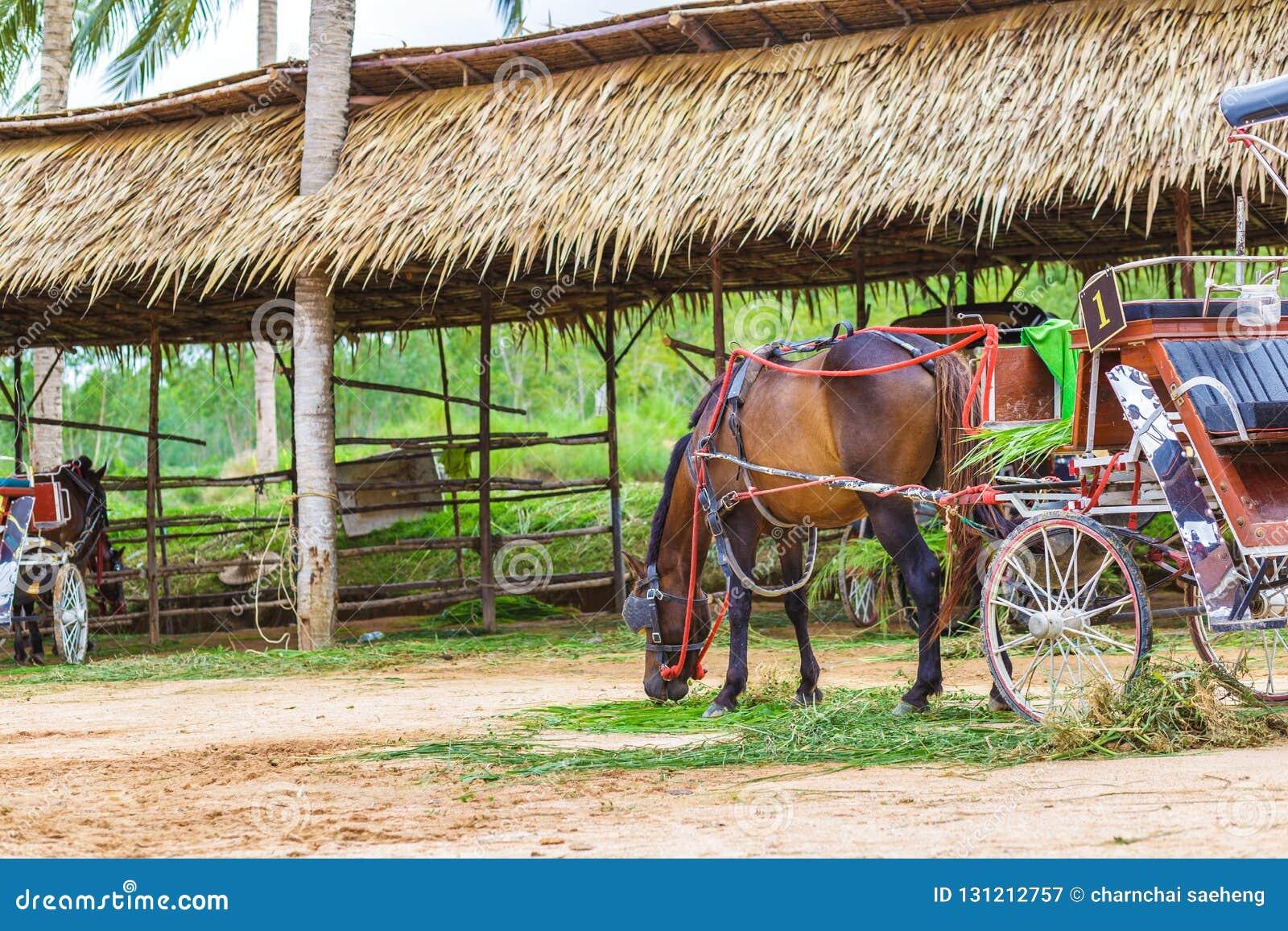 Un cheval et un beau vieux chariot dans la vieille ferme