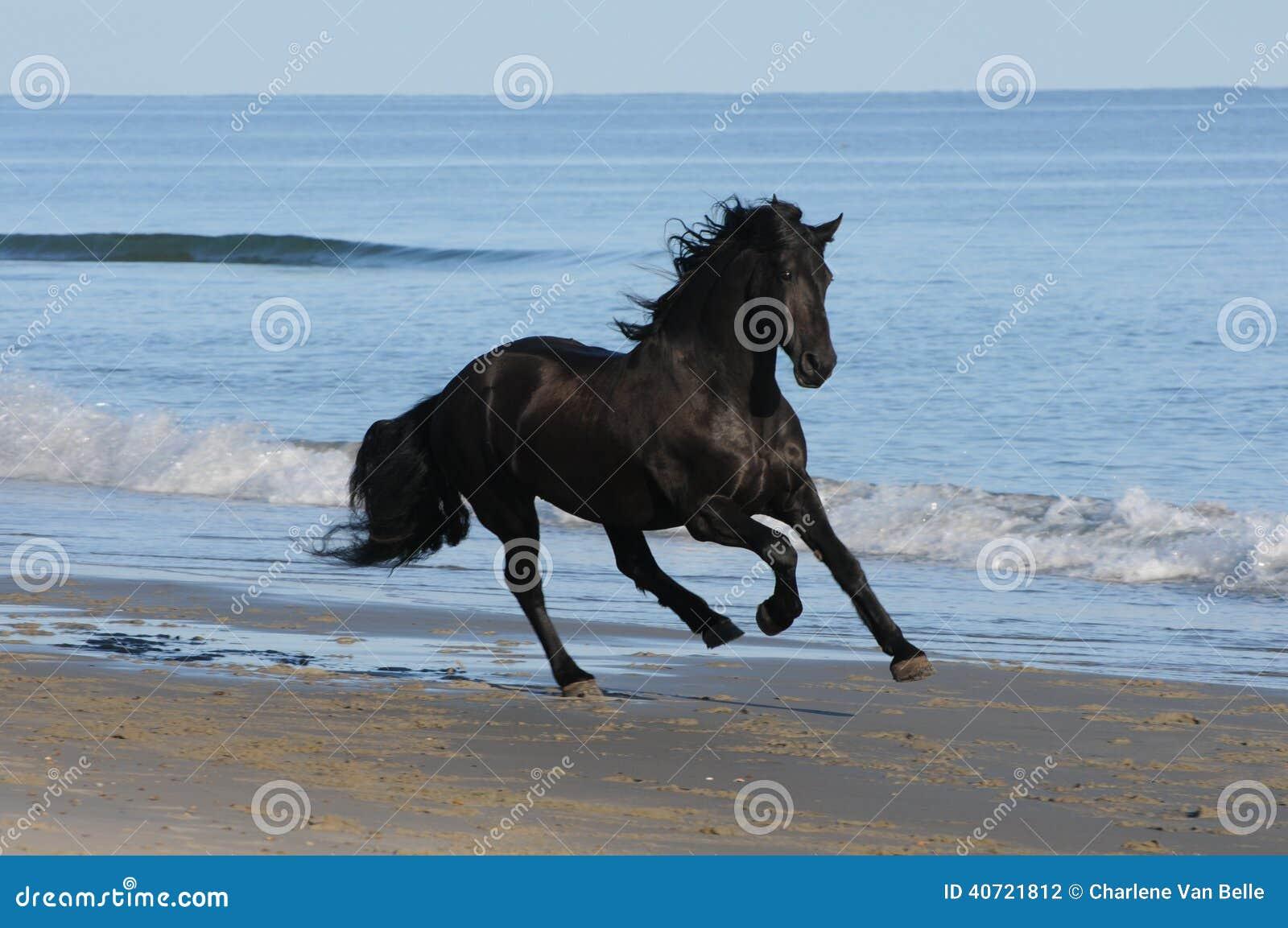 A cheval sur la bite de mon homme - 4 5
