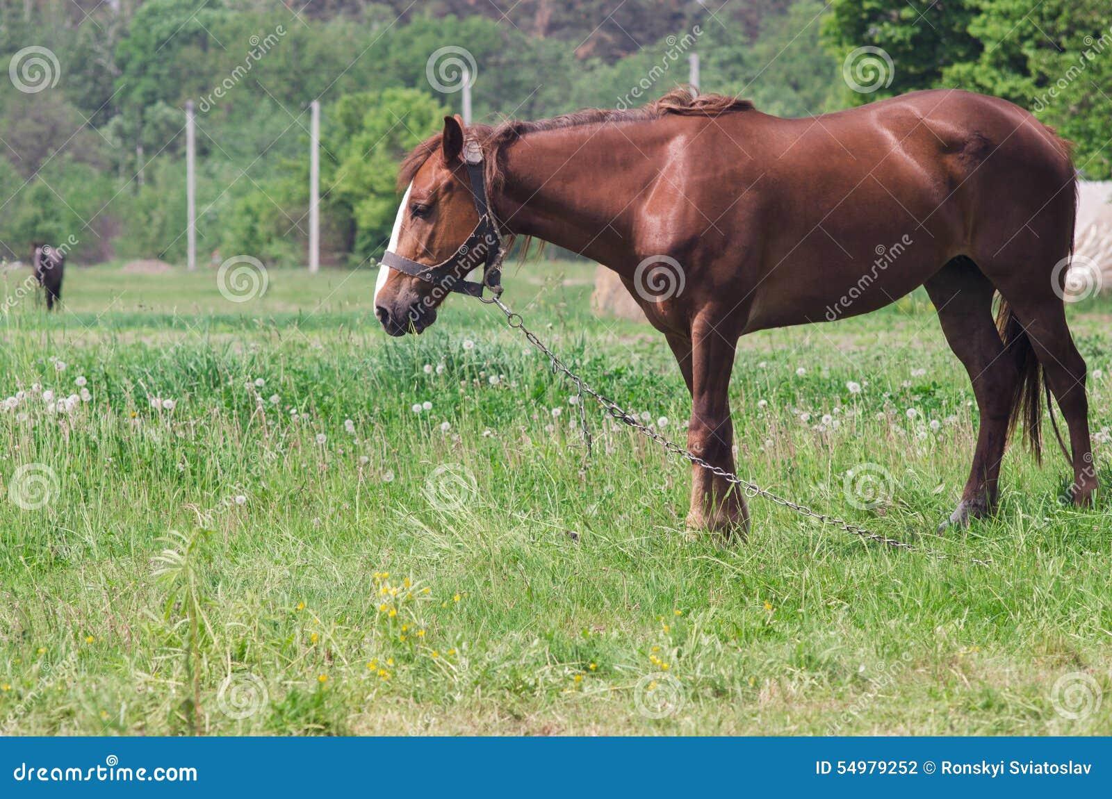 Un cheval frôle