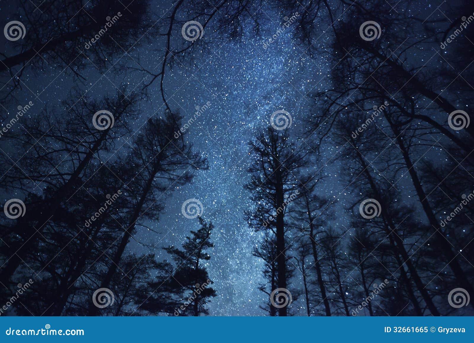 Un cielo nocturno hermoso, la vía láctea y   árboles