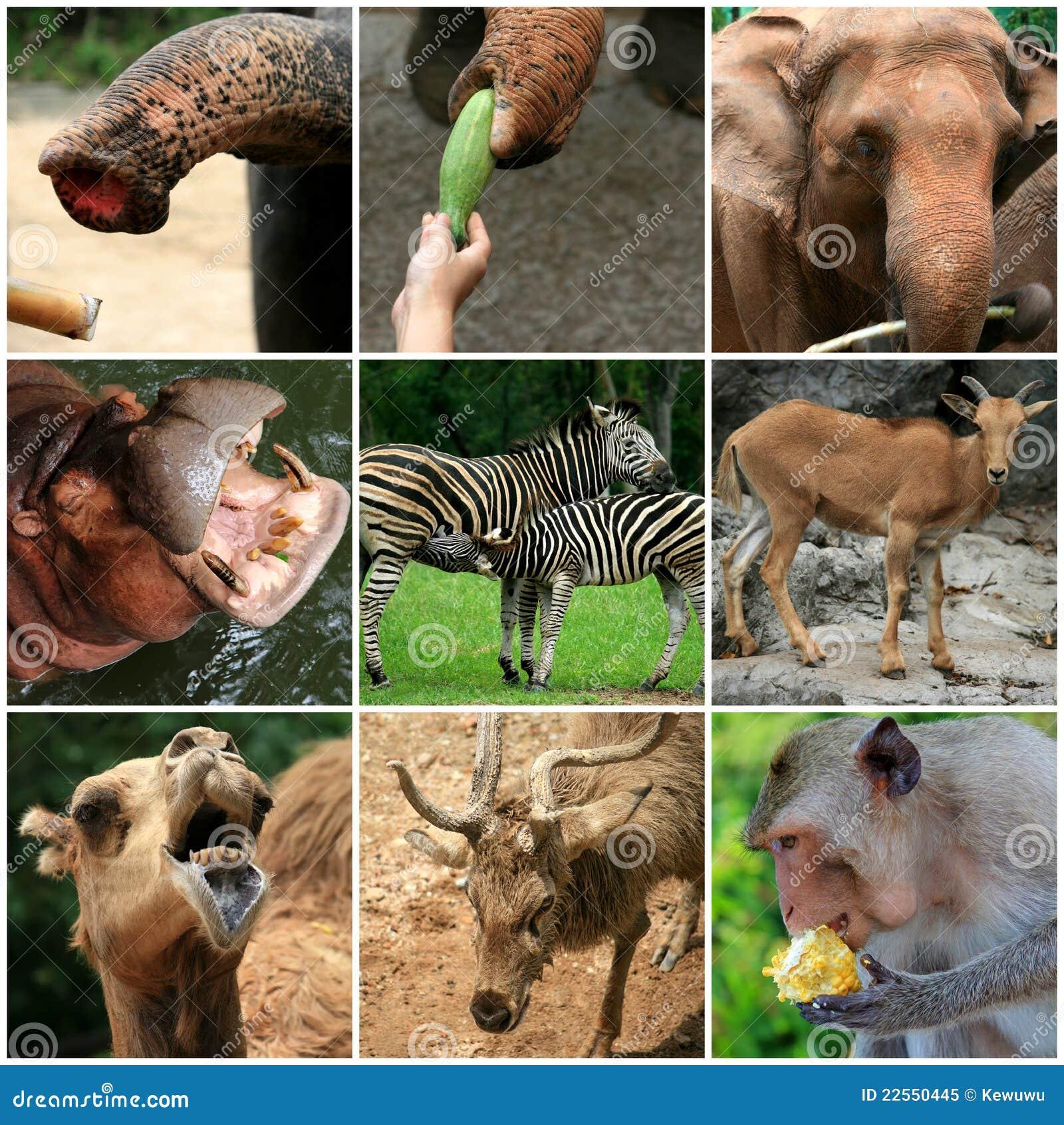 foto de animal del zoo:
