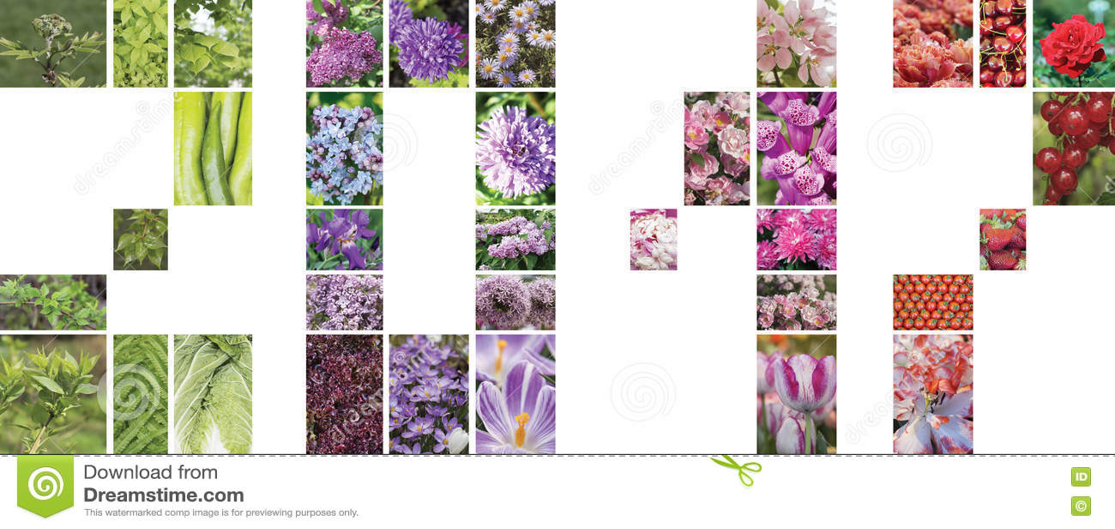 Un Collage Des Fleurs Des Plantes Et Des Fruits Sous Forme De