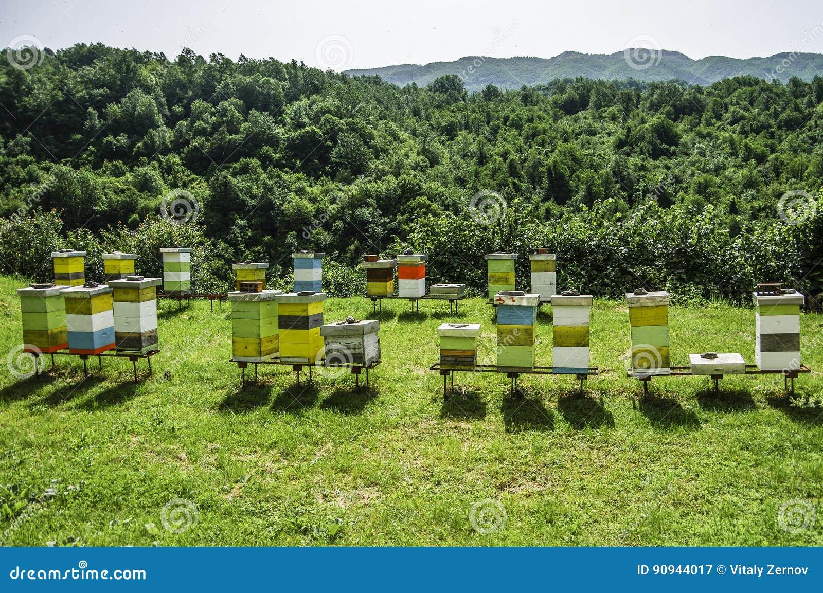 Un colmenar con las colmenas de la abeja