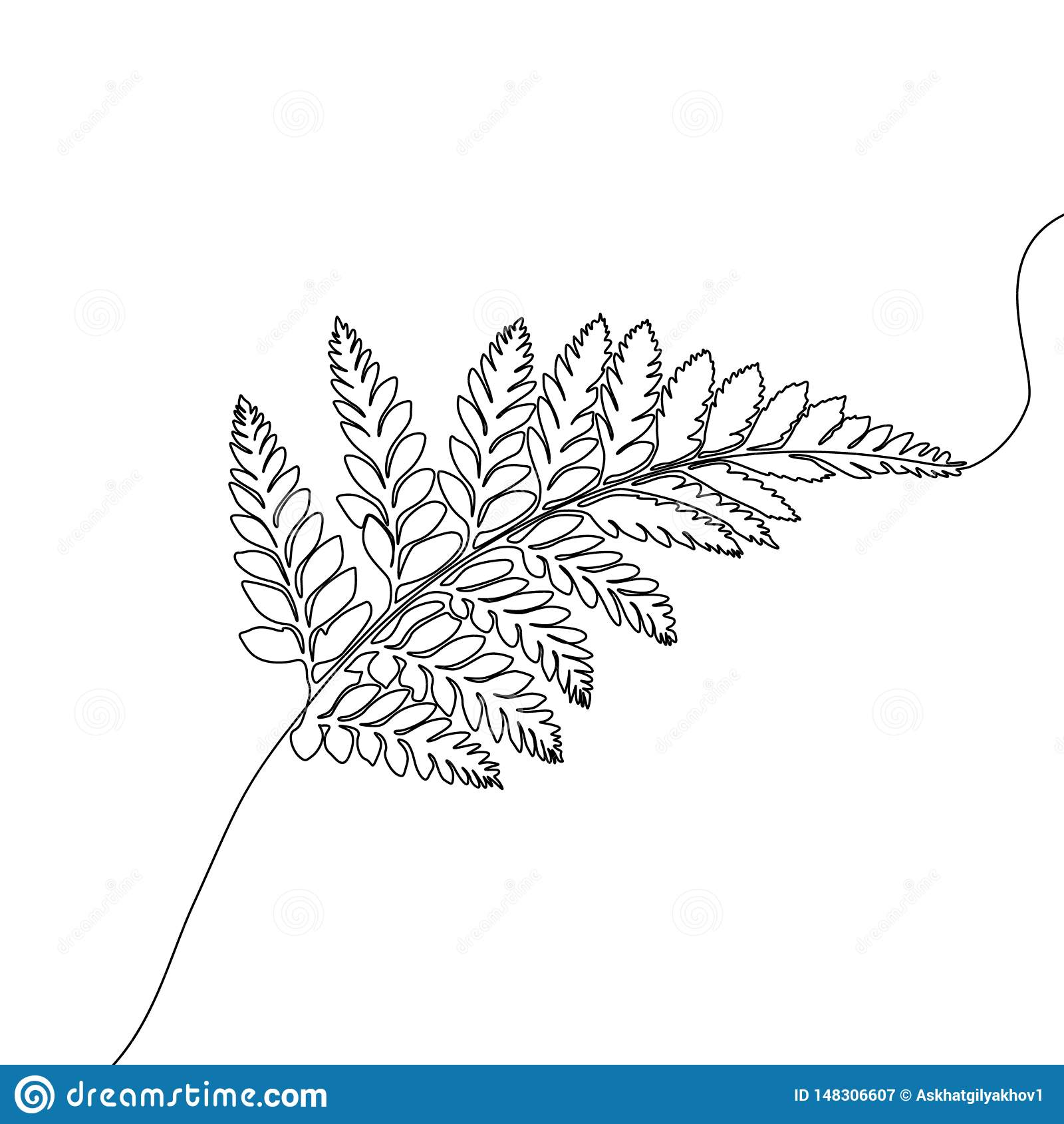 Un continuo felce del disegno a tratteggio, pianta tropicale esotica