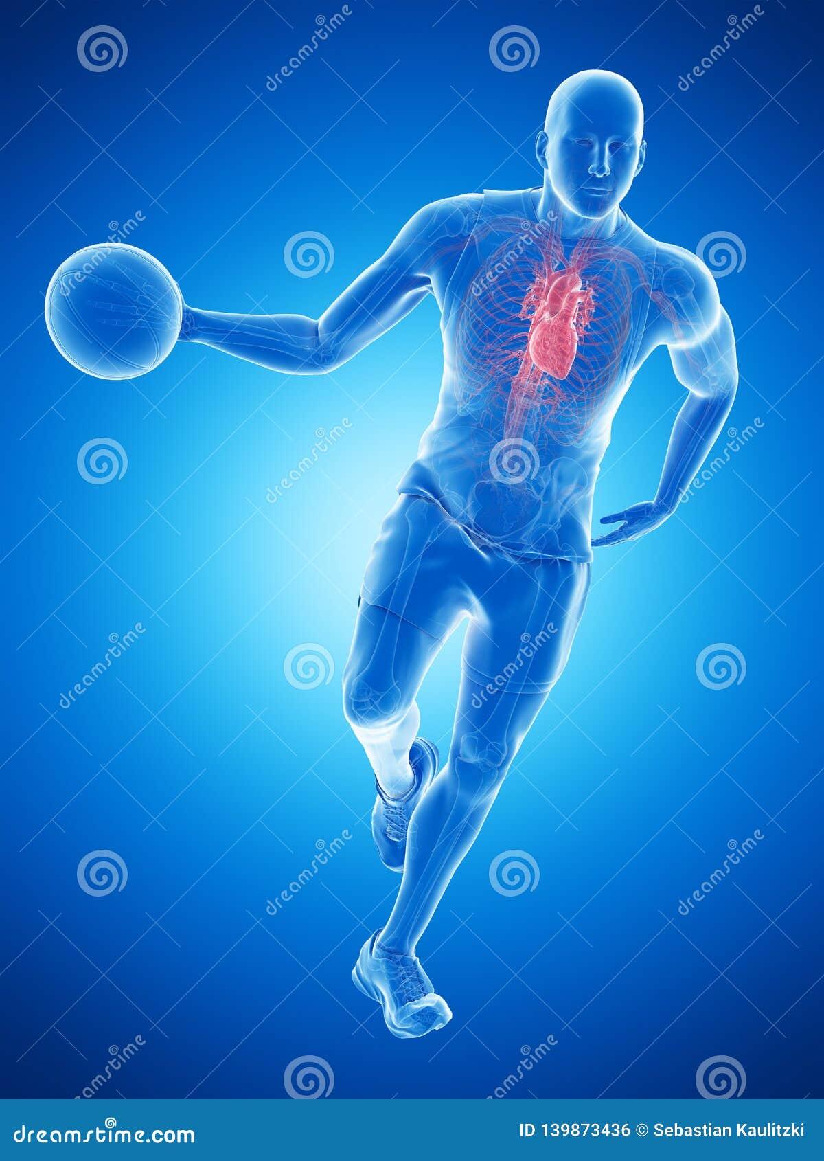 Un corazón de los jugadores de básquet