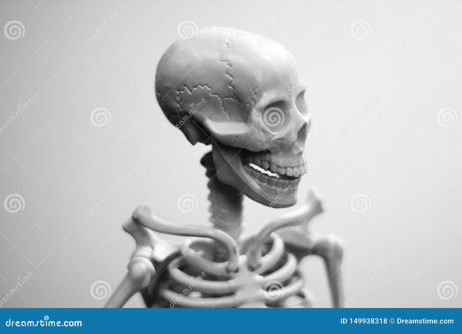 Un crâne d homme de sourire