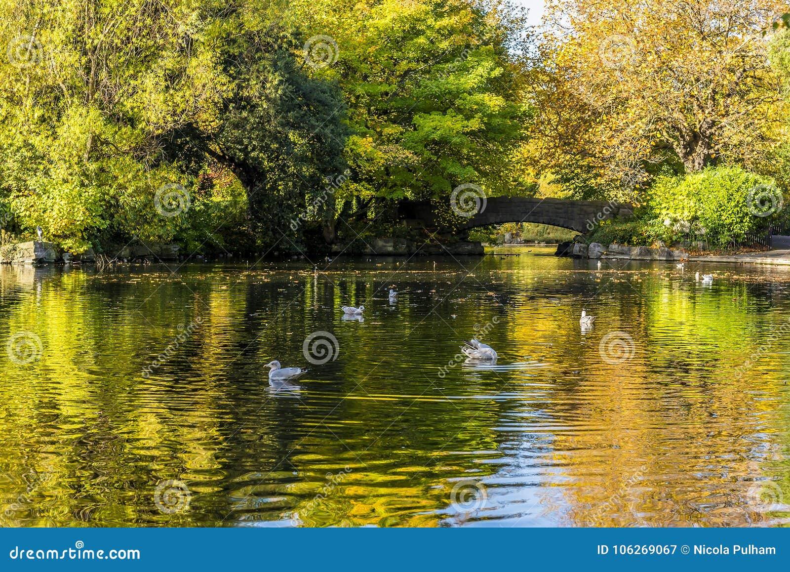Un día brillante del otoño en parque del verde del ` s de St Stephen, Dublín, Irlanda