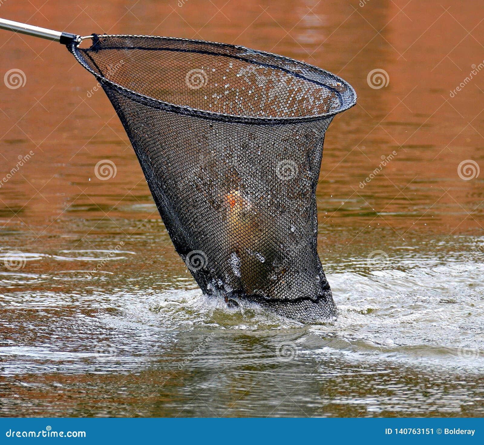 Un des articles les plus nécessaires dans l arsenal du pêcheur est un atterrissage-filet de pêche Les premiers poissons ont attra