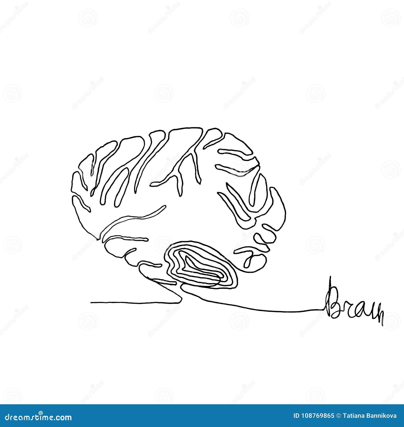 Un Dibujo Lineal Continuo Cerebro De Seres Humanos De La Anatomía St ...