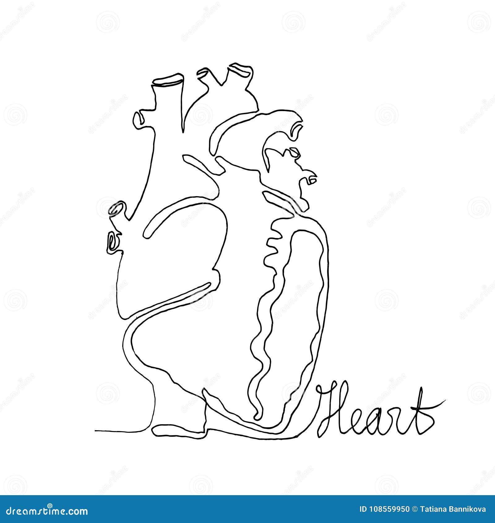 Un Dibujo Lineal Continuo Corazón De Los Seres Humanos De La ...