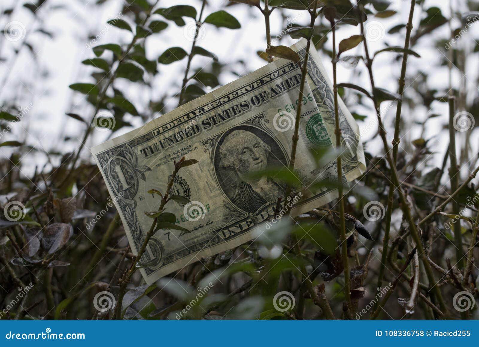 Un dollar américain sur l arbre