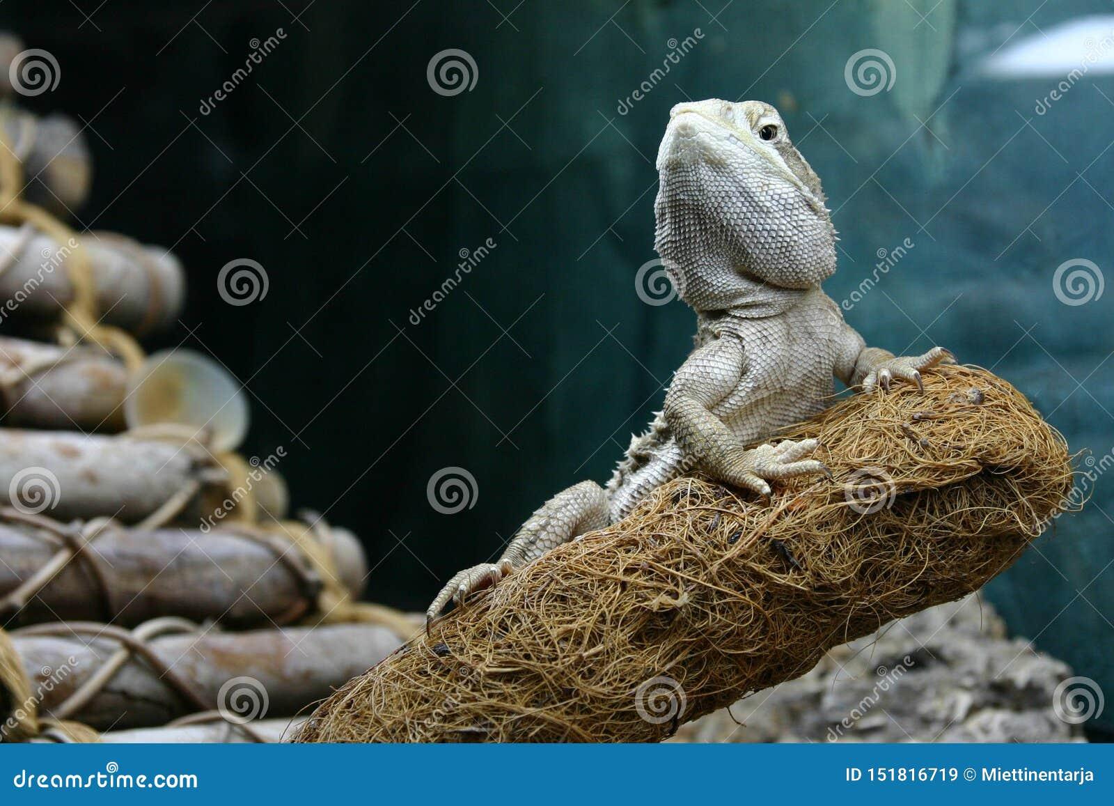 Un dragón de los rankin está descansando sobre una rama que parece noble