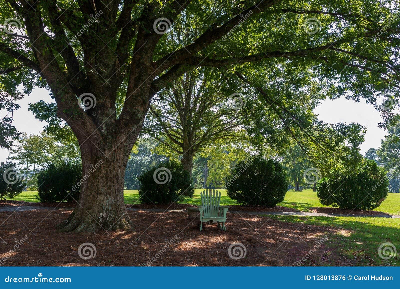Un endroit de relaxation dans une chaise d Adirondack sous un grand, écartant arbre