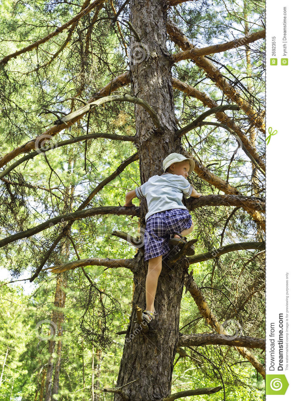 Un Enfant Mont 233 Sur Un In Field De Pin Arbre Photo Libre