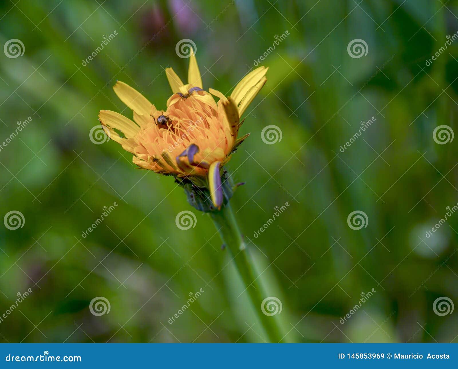 Un escarabajo minúsculo casi ocultado