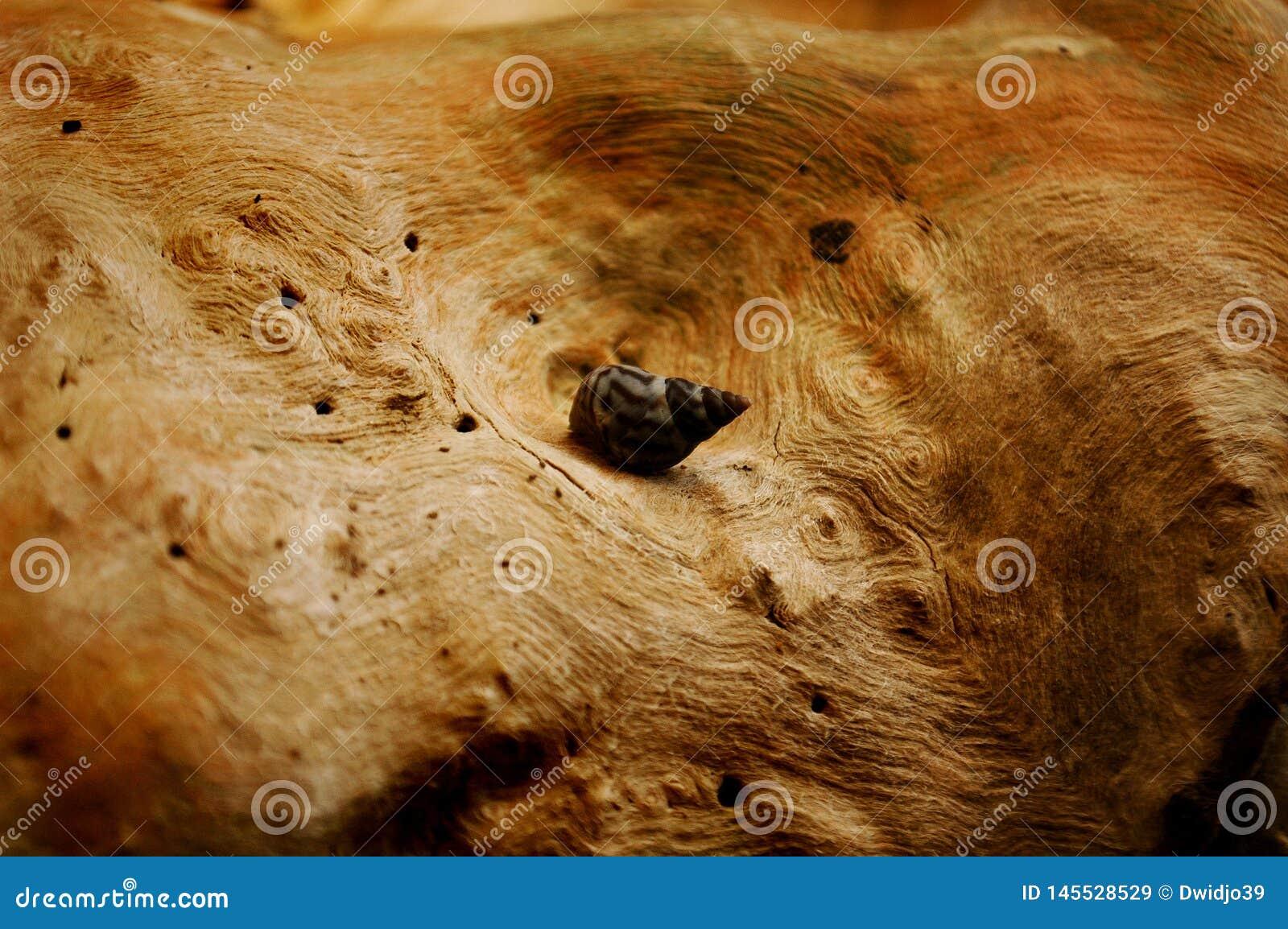 Un escargot de mer sur un tronc d arbre naturellement texturisé