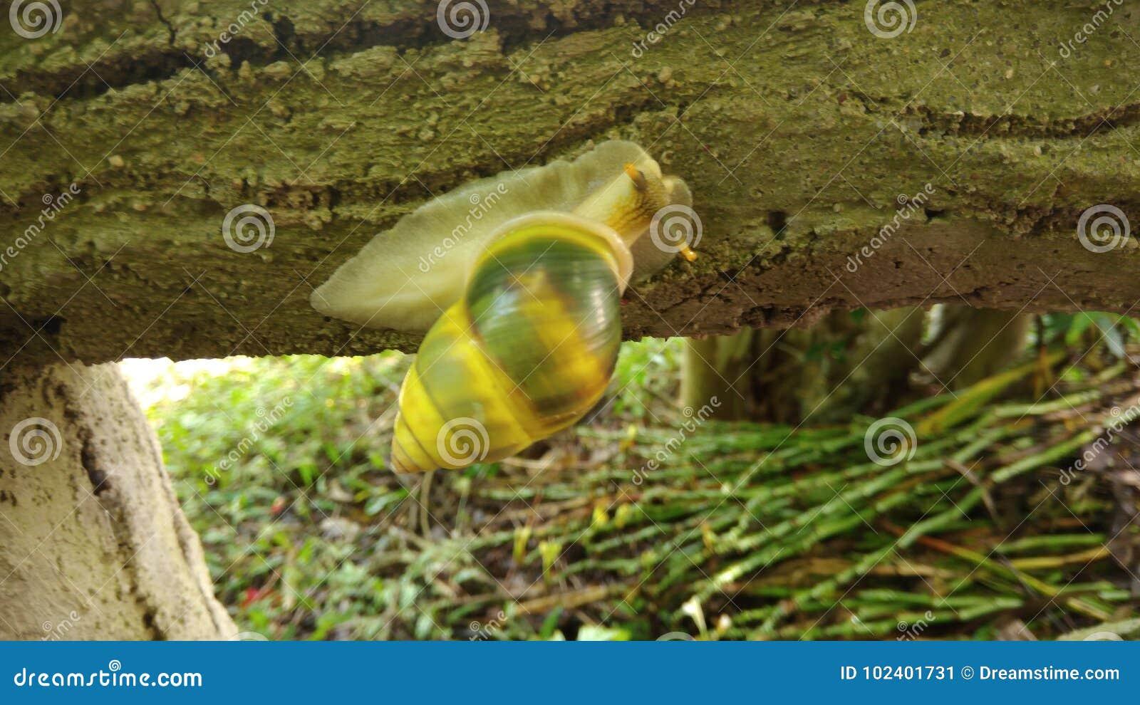 Un escargot merveilleux que je n ai jamais pour voir avant